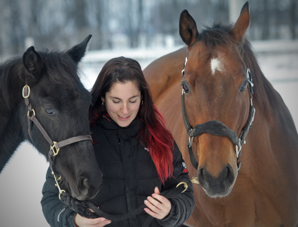 Le cheval domestiqué