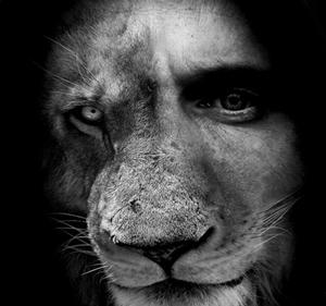 L'homme prédateur carnivore
