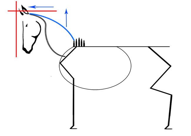 Flexion de la nuque cheval