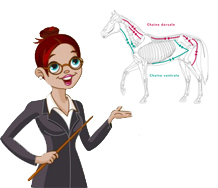 Clinique équitation Quebec