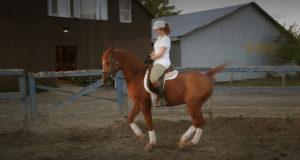 entrainement-cheval-marie-helene-menard-laroche