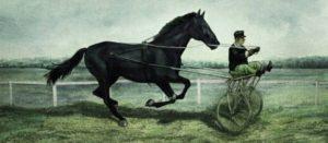 entrainement-cheval-plus-vite-que-la-musique