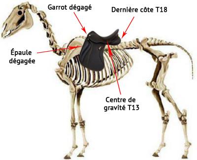 saddle fitting placement de la selle